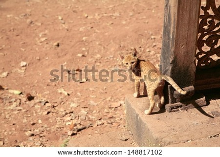 Cat in indian village - stock photo