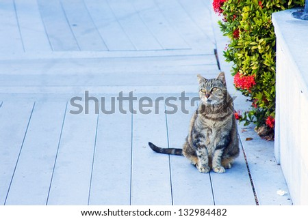Cat in Key West, Florida - stock photo