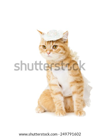 cat in lady dress and hat