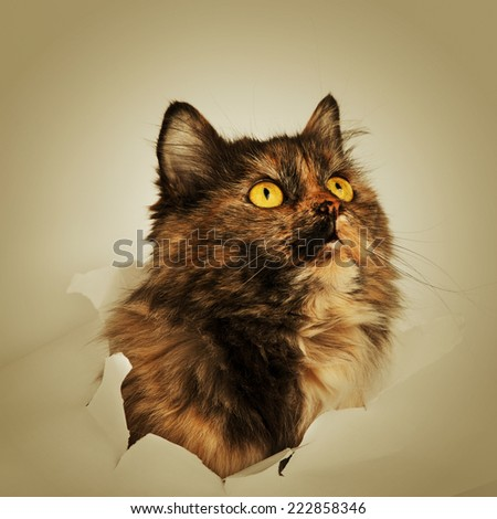 Cat in paper side torn hole - stock photo