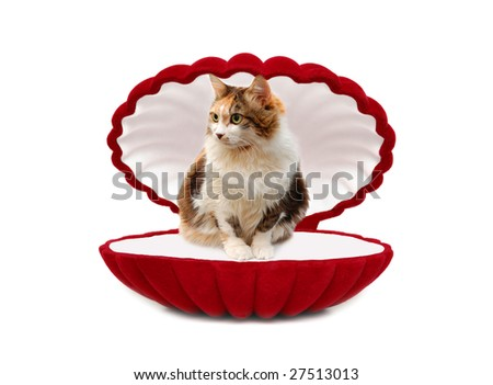 Cat in red box isolated over white background