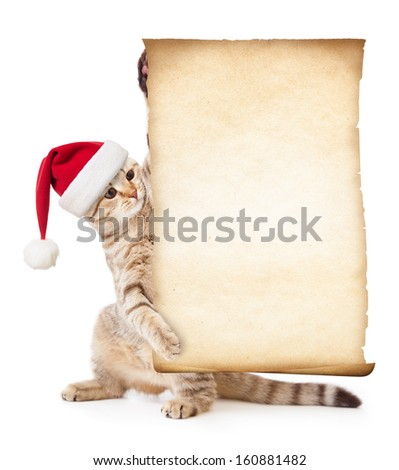 Cat in Santa's hat with old paper roll or parchment - stock photo