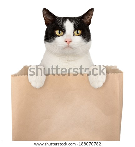 Cat in shopping bag isolated on white background. Pet shop concept - stock photo