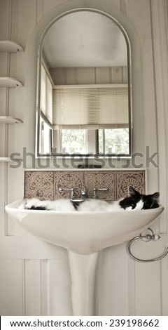 Cat in sink - stock photo