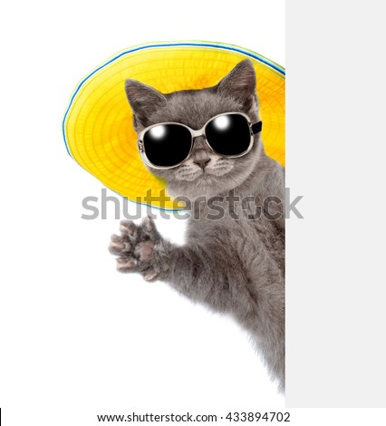 Cat in sunglasses and hat peeking from behind empty board and waving his paw. isolated on white background - stock photo
