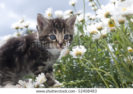 Cat in the bloom sea - stock photo