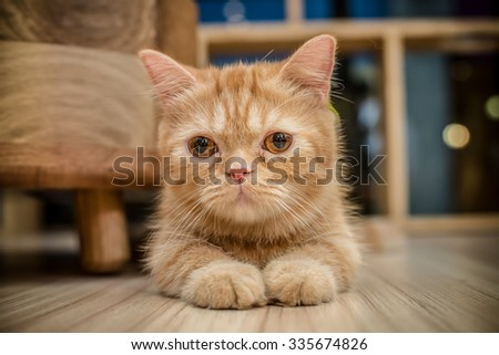 Cat in the cafe - stock photo