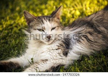 Cat in the garden - processed colors - stock photo