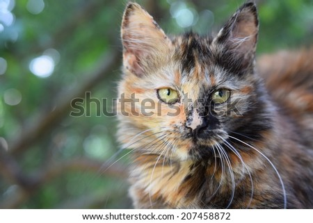 Cat in the green foliage - stock photo