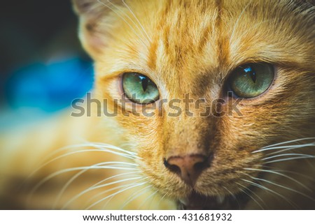 Cat in the Green Grass in Summer. Beautiful Red Cat with Yellow Eyes Cat Eyes Cat Cat  - stock photo