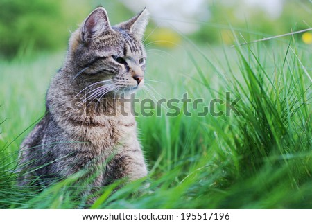 Cat in the meadow - stock photo