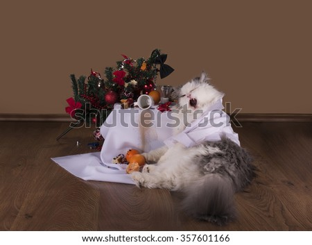 Cat in the morning after New Year's party - stock photo