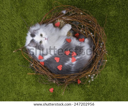 Cat in the nest on the green grass with the words love - stock photo