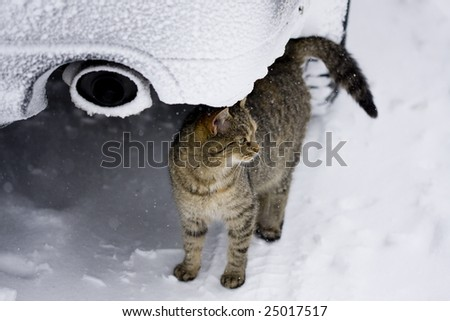 Cat in the winter environment, hidden under the car - stock photo