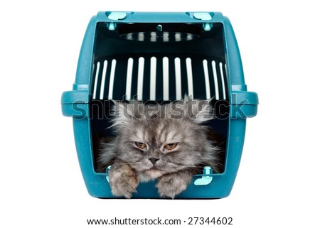 Cat in transport box - stock photo
