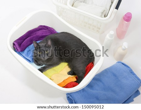 Cat in white plastic basket with colorful laundry to wash - stock photo