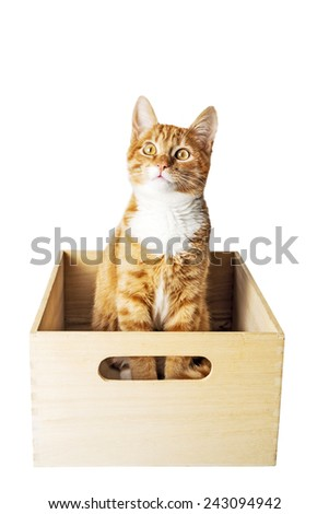 Cat in wooden box - stock photo