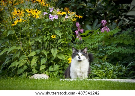 Cat in yard by flowers.