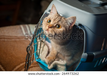 Cat inside pet carrier - stock photo