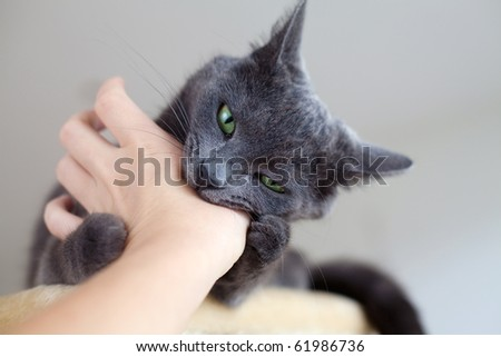 cat is biting a human's hand