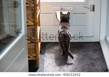 cat is going outside by the cat gate in door