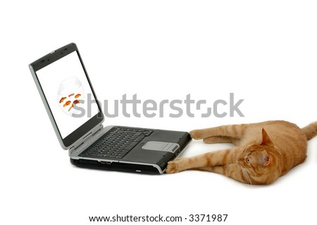 Cat is looking at a laptop with a picture of a bowl of fish. - stock photo