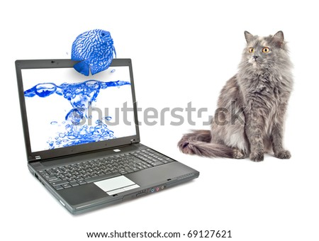 Cat is looking at a laptop with a picture of a fish. - stock photo
