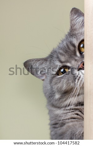 Cat is looking in camera - stock photo