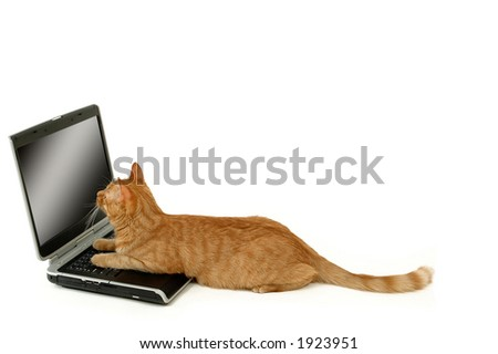 Cat is lying in front of a laptop - stock photo