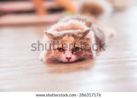 Cat is peeking while laying down. - stock photo