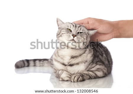 Cat is petted - stock photo