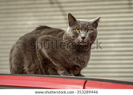 Cat is sitting in a car - stock photo