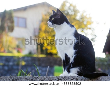 Cat is sitting on a concrete wall. - stock photo