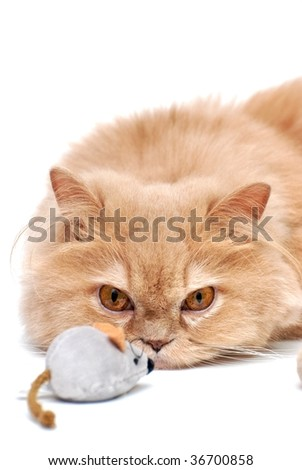 Cat is staring at mouse - stock photo