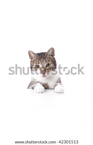 Cat is stearing on one point. Cats' paws on the white table. - stock photo