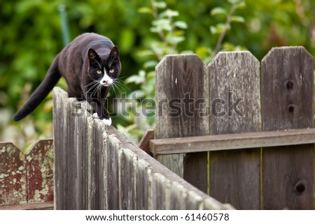 how to stop cat walking on fence