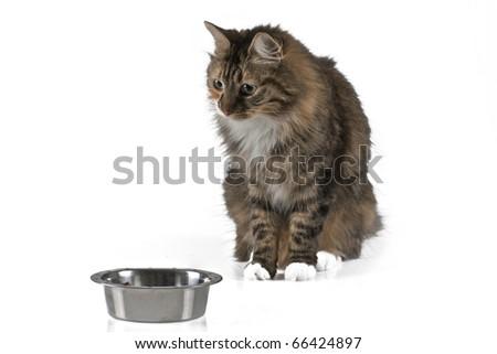 cat isolated on white background - stock photo