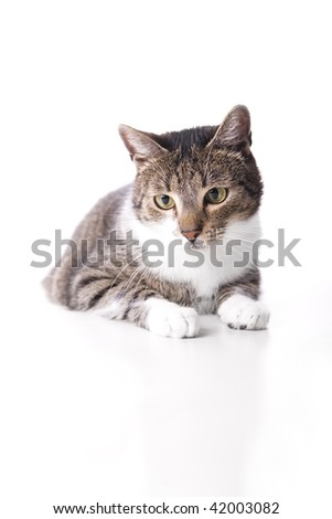 Cat isolated on white background looking at one point. - stock photo