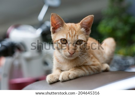 Cat, kitten on a motorcycle - stock photo