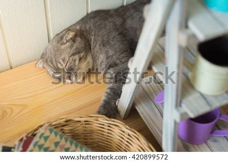 Cat lay down sleep on wood floor - stock photo