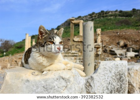 Cat laying  on a pillar in the Ancient City of Ephesus  - stock photo