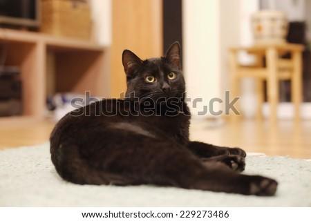 Cat laying on the couch - stock photo
