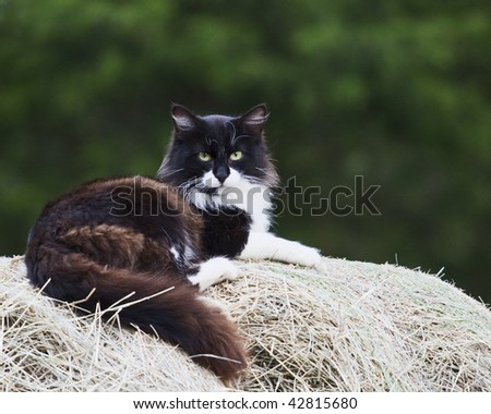 Cat laying on top of hay bale