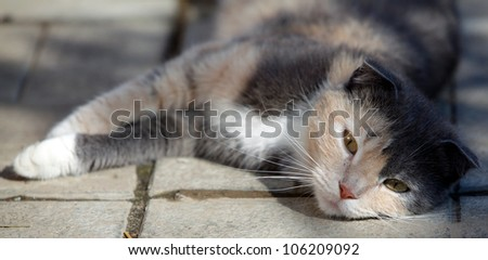 Cat lies on the floor outdoor - stock photo