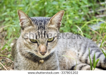 cat looking