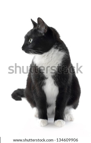 Cat Looking Aside, white Background - stock photo