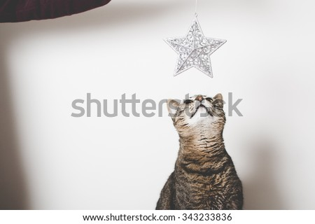 Cat looking at Christmas decoration - stock photo
