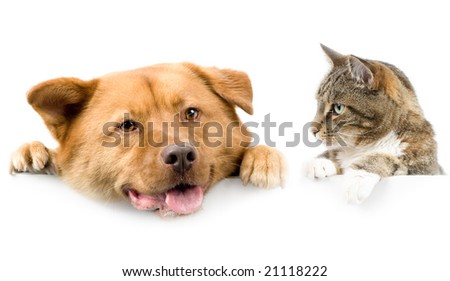 Cat looking at dog above white banner - stock photo