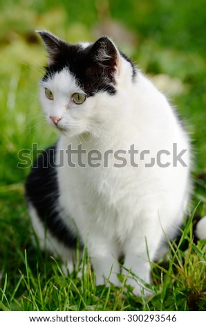 cat looking away against green background, vertical - stock photo