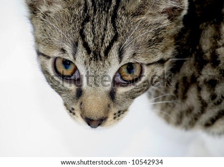 cat looking from below isolated on white - stock photo